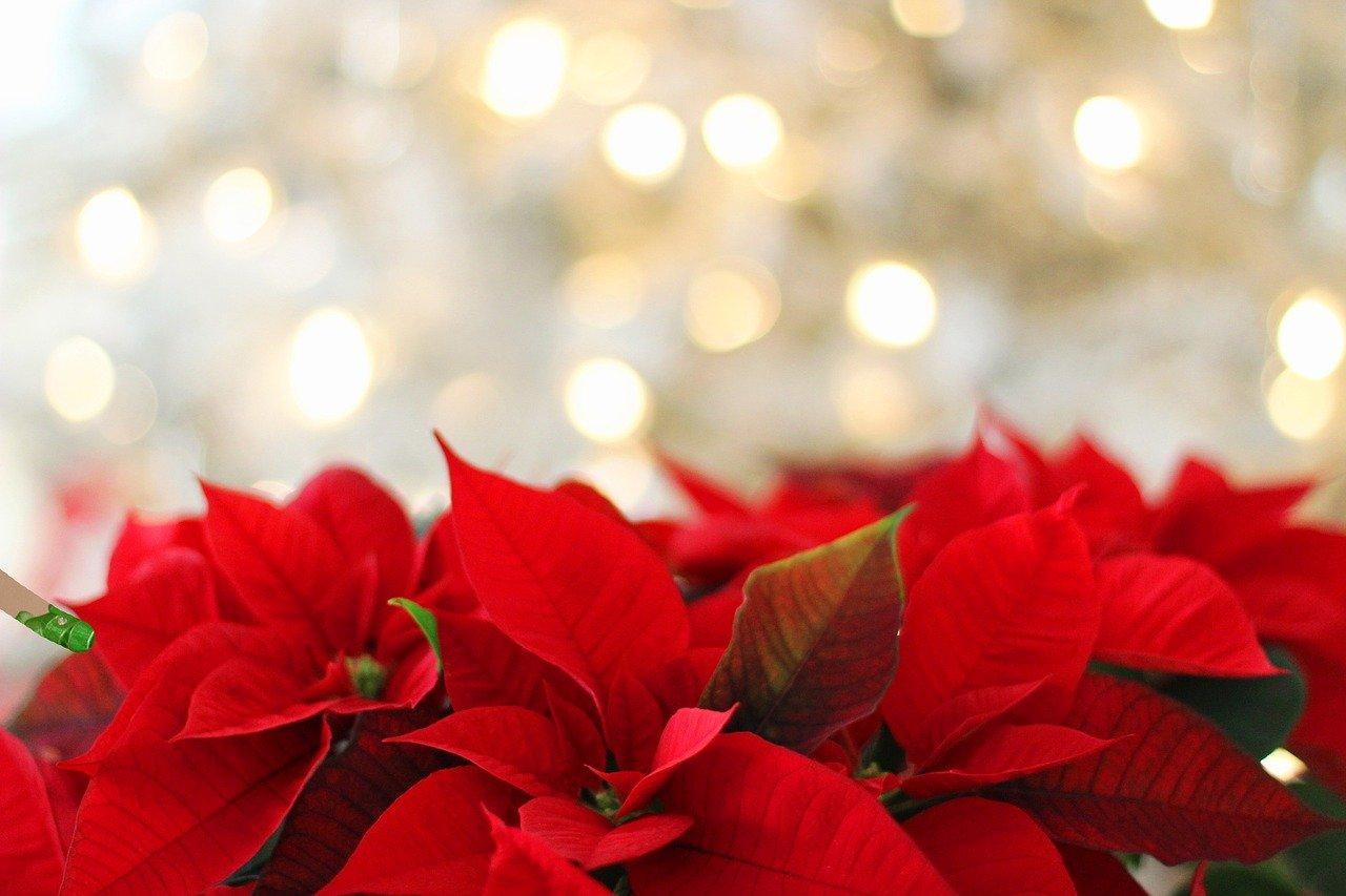 Leggenda della stella di Natale - Elfisanta.it